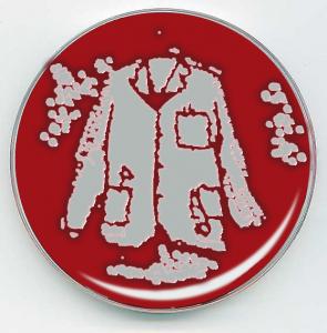 short-coat-petrie-dish2
